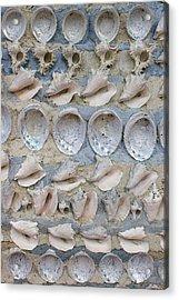 Shells Acrylic Print by Randy Pollard