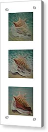 Shells Triptych 2 Acrylic Print by Don Young
