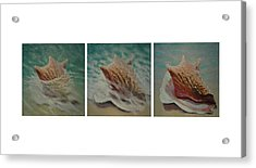 Shells Triptych Acrylic Print by Don Young