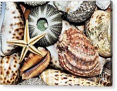 Shellscape Acrylic Print by Kaye Menner