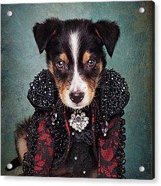 Shelter Pets Project - Loki Acrylic Print by Tammy Swarek