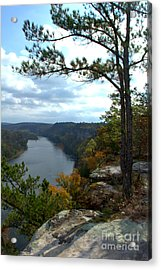 Acrylic Print featuring the photograph Sheltering Pine by Jim McCain