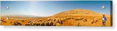 Shepherd Standing With Flock Of Sheep Acrylic Print by Panoramic Images