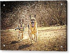 Shepherds On The Run Acrylic Print by Eleanor Abramson