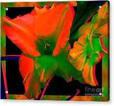 Sherbert Gladiolus Acrylic Print
