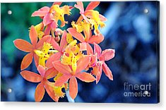 Sherbert Of The Sun Acrylic Print