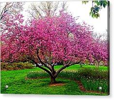 Sherwood Gardens Tree Acrylic Print