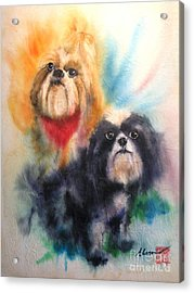 Shih Tsu Siblings Acrylic Print