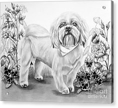 Shih Tzu In Black And White Acrylic Print