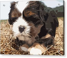 Shih Tzu On A String Acrylic Print by Robert Margetts