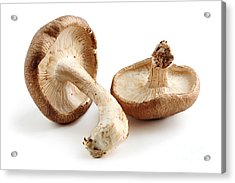Shiitake Mushrooms Acrylic Print by Elena Elisseeva