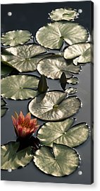Shimmering Lily Pads Acrylic Print