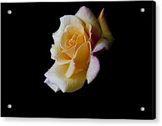 Acrylic Print featuring the photograph Shimmering by Doug Norkum