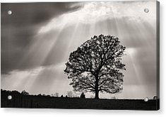Shining Down Acrylic Print by JC Findley