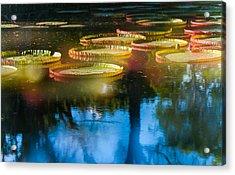 Shining Leaves Of Victoria Regia. Royal Botanical Garden In Mauritius. Impressionistic Acrylic Print