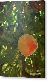 Shining Peach Acrylic Print by Kerri Mortenson