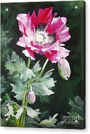 Shining Star Poppy Acrylic Print by Suzanne Schaefer