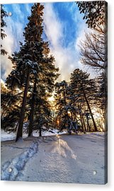 Shining Through Acrylic Print by Mark Papke