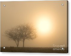 Shining Through Acrylic Print by Mike  Dawson