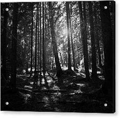 Shining Through Acrylic Print by Nicklas Gustafsson