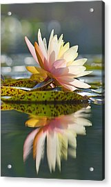 Shining Water Lily Acrylic Print