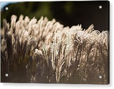 Acrylic Print featuring the photograph Shining Weeds by Mike Lee