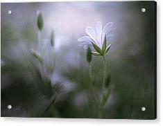 Shinning Acrylic Print