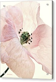 Shirley Watercolor Acrylic Print by Chris Berry