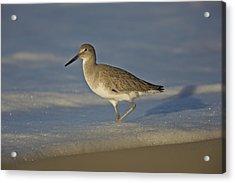 Shore Bird Mg_7903 Acrylic Print