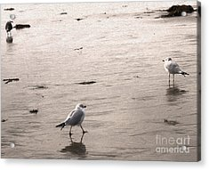 Shore Birds - 01 Acrylic Print by Gregory Dyer