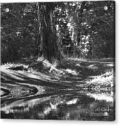 Acrylic Print featuring the pyrography Shore by Evgeniy Lankin