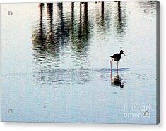 Shorebird 1.0388 Acrylic Print by Stephen Parker