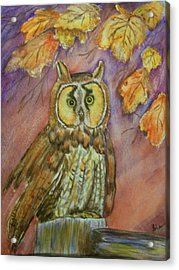 Short Eared Owl Acrylic Print by Belinda Lawson