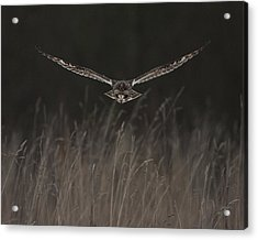 Acrylic Print featuring the photograph Short Eared Owl Focused by Paul Scoullar