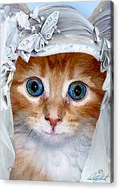 Shotgun Bride  Cats In Hats Acrylic Print