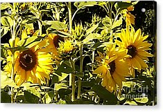 Shout Out Summer Acrylic Print by Martin Howard