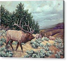Acrylic Print featuring the painting Showdown by Craig T Burgwardt
