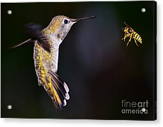 Acrylic Print featuring the photograph Showdown by Jack Moskovita