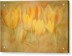 Showtime Tulips Acrylic Print