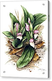 Acrylic Print featuring the painting Showy Orchis by Bob  George