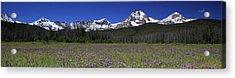 Showy Penstemon Wildflowers Sawtooth Mountains Acrylic Print