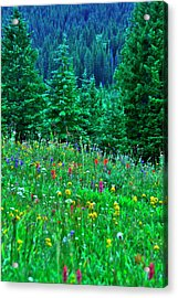 Shrine Pass Wildflowers Acrylic Print