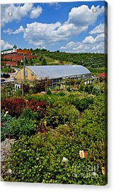 Shrubbery At A Greenhouse Acrylic Print by Amy Cicconi
