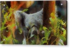 Shy Koala Acrylic Print by Dan Sproul