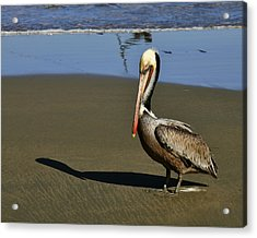 Acrylic Print featuring the digital art Shy Pelican by Gandz Photography