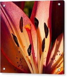 Shy Pink Lily Acrylic Print by Omaste Witkowski