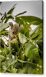 Acrylic Print featuring the photograph Shy Squirrel by Bradley Clay
