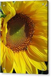 Shy Sunflower Acrylic Print by Laura Corebello