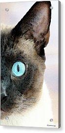 Siamese Cat Art - Half The Story Acrylic Print by Sharon Cummings