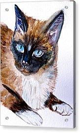 Siamese Cat Portrait Acrylic Print